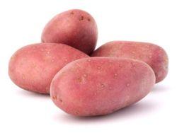 Reichskanzler Kartoffelsorte