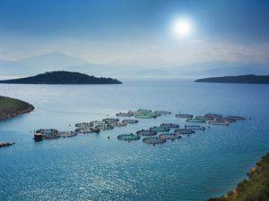 Frische Fische - Die neue Qualität der Aquakultur