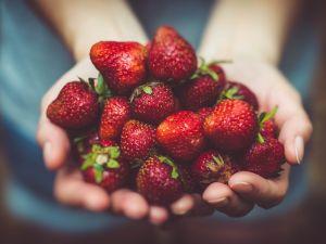 Landwirte entsorgen 21.000 Tonnen essbare Erdbeeren