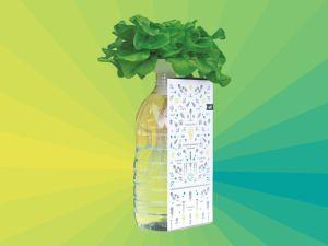 BottleCrop – Salat in der Flasche