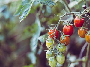 Diese 7 Pflanzen sollte man nicht komplett verspeisen