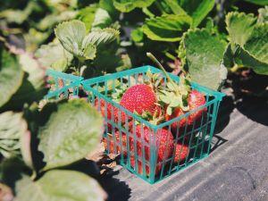 Erdbeeren lagern: So bleiben die Früchte frisch