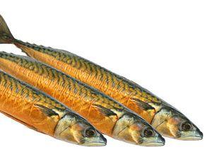Fisch macht wirklich schlau