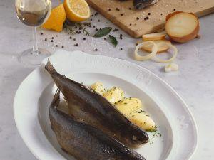 Forelle Blau mit Petersilienkartoffeln Rezept