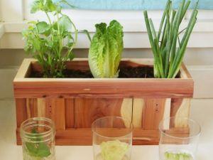 Gemüse, das man immer wieder nachzüchten kann