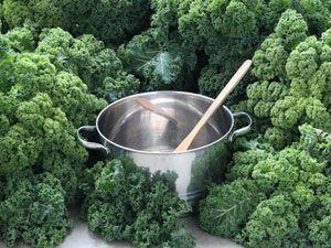 Der neue Geheimtipp auf dem New Yorker Gemüsemarkt – Grünkohl!