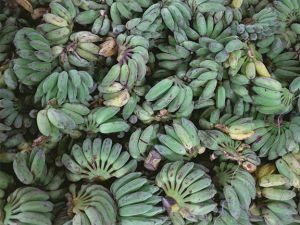 Grünes Bananenmehl ist DER neue Food-Trend!