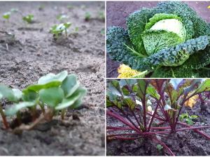 Der Garten im Herbst – Was kann man noch pflanzen?