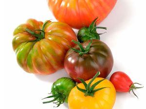 Alte Tomatensorten liegen wieder im Trend