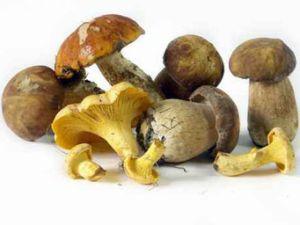 Darf man Pilze aufwärmen?