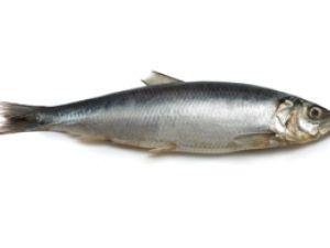 Schwarmfische aus deutscher See: Hering