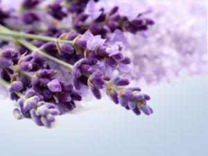 Köstlichkeiten aus Lavendel