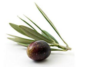 Warum Oliven einfach zum Sommer gehören