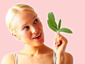 Salbei: herbes Heilkraut mit kulinarischen Werten