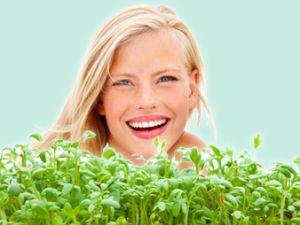 Sprossen & Co.: kalorienarme Vitaminbomben von der Fensterbank