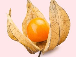 Physalis (Kapstachelbeere)