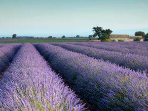 """8 """"Must-Eats"""" für den nächsten Südfrankreich-Urlaub"""