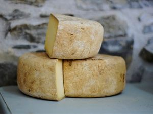 Wie harte Drogen: Käse kann süchtig machen!