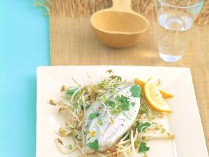Koriander Fisch Rezept