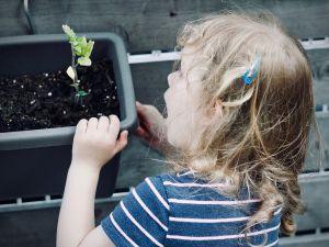 Kräuter ziehen: Kinderspaß mit kulinarischem Wert