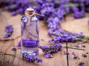 Abnehmen mit Lavendel?