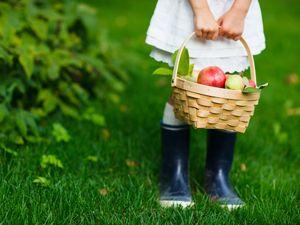 Die 7 schönsten Gärten um Obst zu pflücken