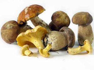 Pilze zubereiten: So gelingen sie am besten!