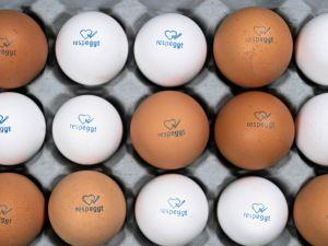 Respeggt: Eier ohne Kükenschreddern ab sofort bei Rewe und Penny