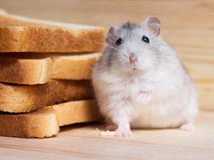 Diese Lebensmittel dürfen im Vorratsschrank nicht fehlen