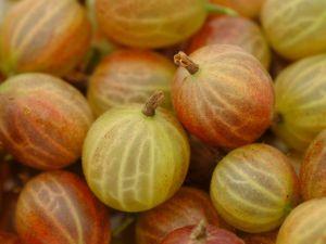5 Gründe: Darum sind Stachelbeeren gesund