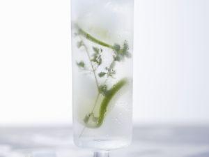 Thymian-Limonaden-Cocktail mit Wodka Rezept