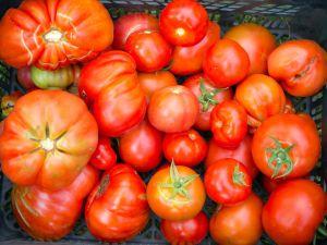 Tomaten: Welche Sorte für welches Rezept?