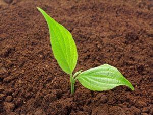 Mit Bio-Produkten die Umwelt schützen