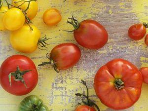 Wie Tomaten gegen Sonne schützen