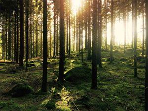 Studie zeigt: Waldluft macht gesund