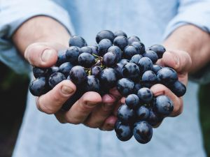 Warum Weintrauben so gesund sind