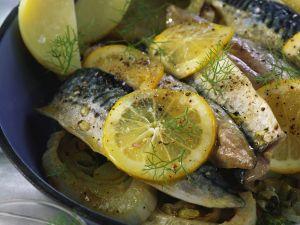 Zitronen-Makrele mit Fenchel Rezept