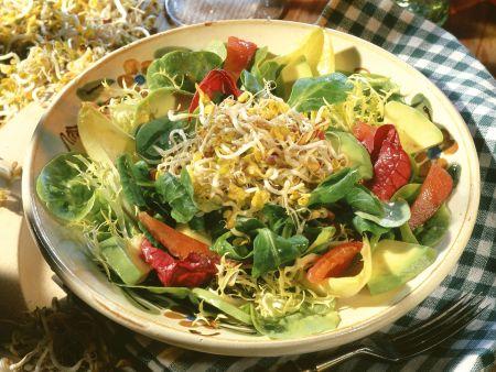 Bunter Blattsalat mit Avocado, Tomate und Sprossen