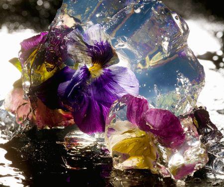 Blüten in Aspik