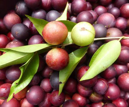 Camu-Camu: Ist ein super Vitamin-C-Lieferant