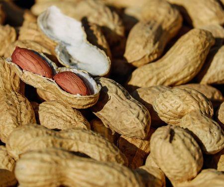 Erdnüsse gesund