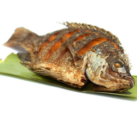 Fittierter Tilapia