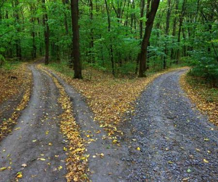 Gegabelter Waldweg