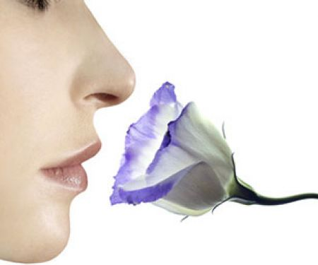 Kann Essen den Geruchssinn verändern?