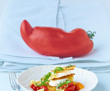 Tomatensalat mit Mozzarella und Röstbrot