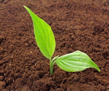 Umwelt schützen- Bio kaufen? © Schlierner