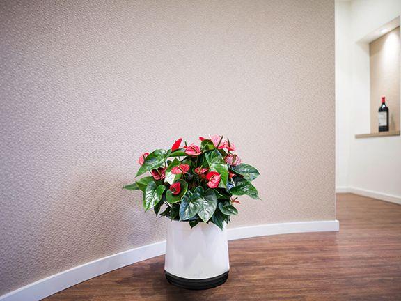 pflanzen f r ein gutes raumklima eat smarter. Black Bedroom Furniture Sets. Home Design Ideas
