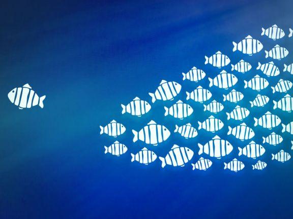 Fisch schwimmt weg vom Schwarm