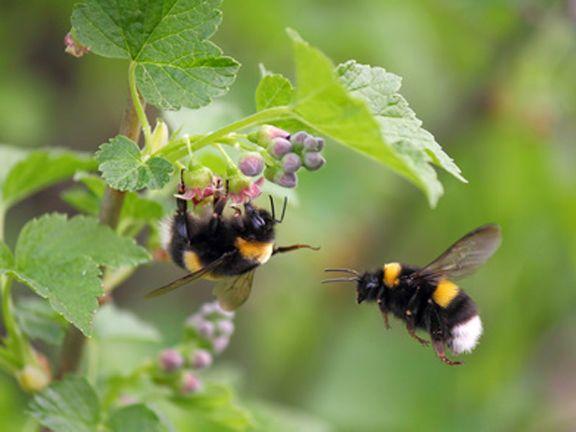 7 lebensmittel die l stige insekten vertreiben eat smarter. Black Bedroom Furniture Sets. Home Design Ideas