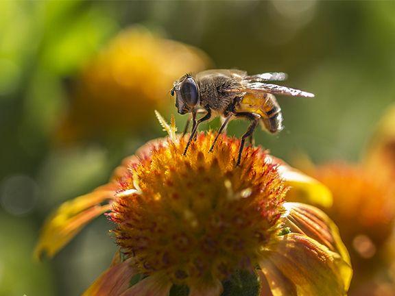 Pestizide für Bienen gefährlich